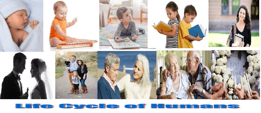 Human Life Cycles
